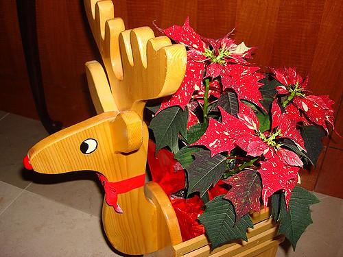 Пуансеттия декор Новый год